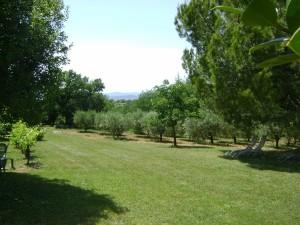 Parc arboré, champs d'oliviers et vue sur les Cévennes